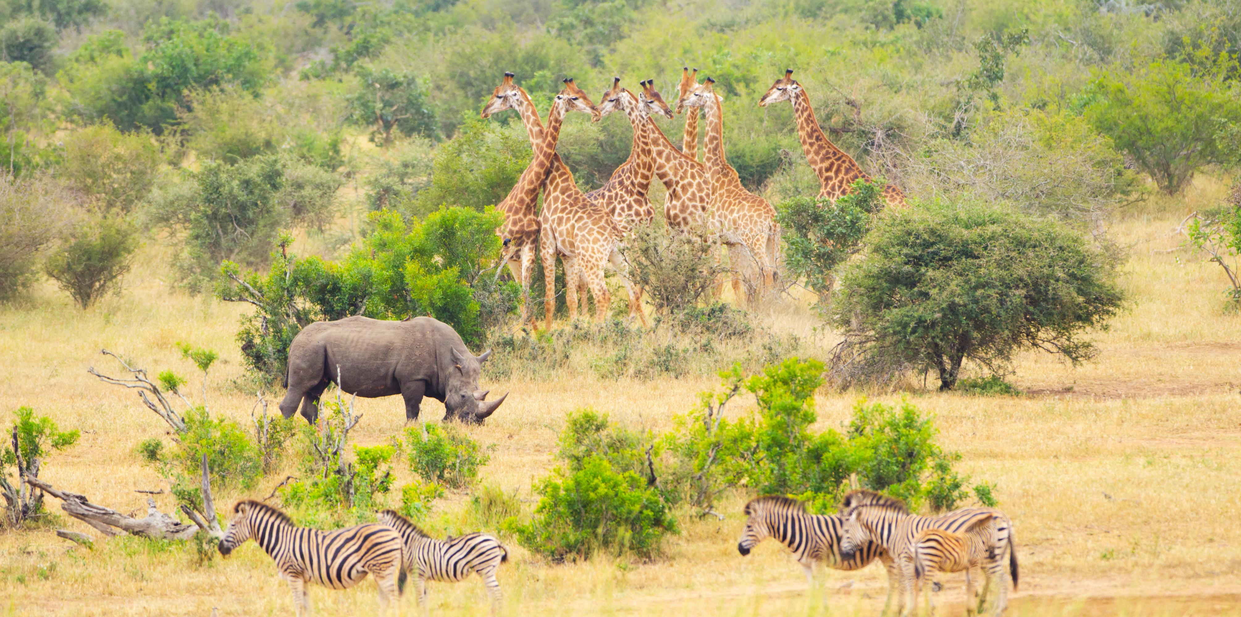 suedafrika tiere afrika