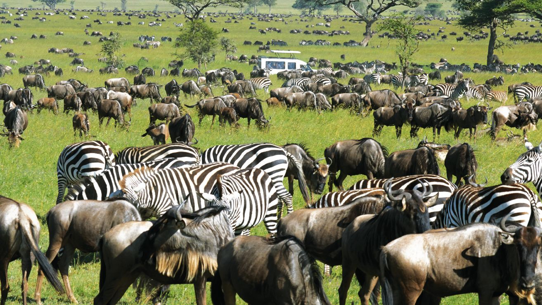Masai_Mara