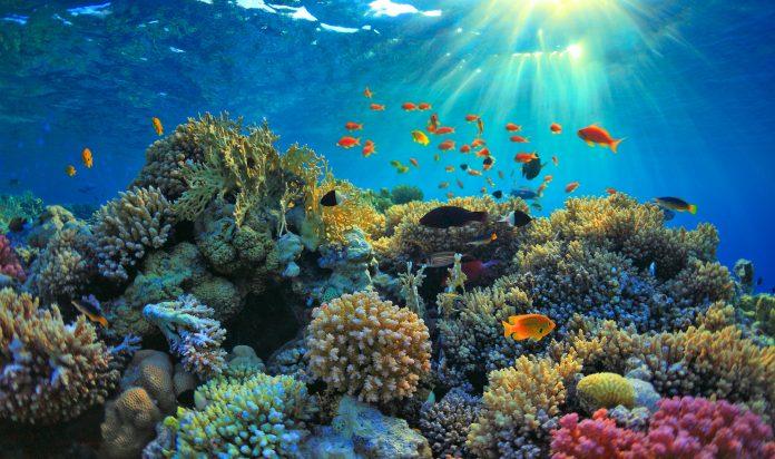nachhaltigkeit korallen im meer